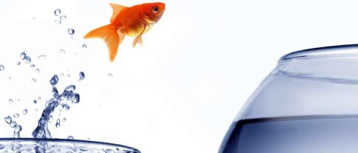 App development blog for Fish head app